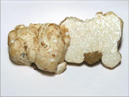 trufe albe